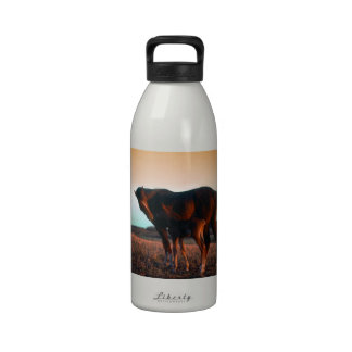 Arabian mare and colt water bottle