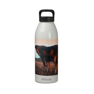 Arabian mare and colt drinking bottle