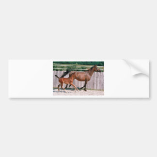 Arabian Mare and Foal Bumper Sticker