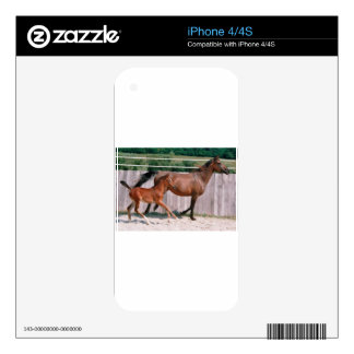 Arabian Mare and Foal Skin For The iPhone 4