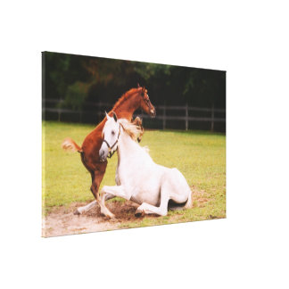 Arabian mare foal Stretched Canvas Print