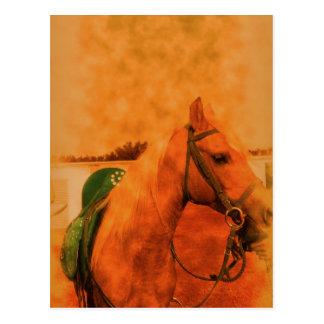 Arabian mare profile postcard