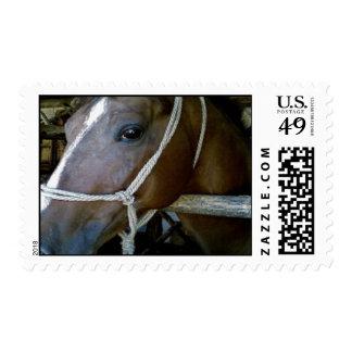 Arabian Postage