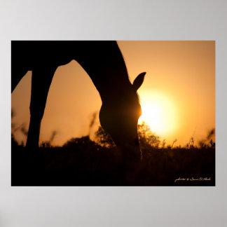 Arabian Silhouette at Sunrise Poster