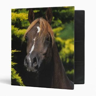 Arabian Stallion Vinyl Binders