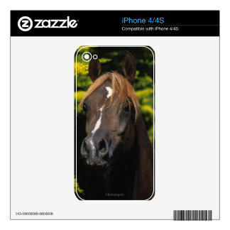 Arabian Stallion Decal For The iPhone 4S