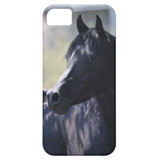 Arabian Stallion iPhone SE/5/5s Case
