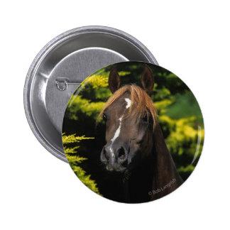 Arabian Stallion Pinback Button