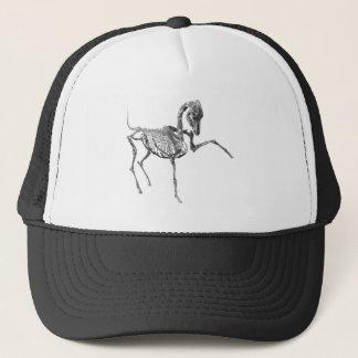 Arabian stallion Skeleton hat