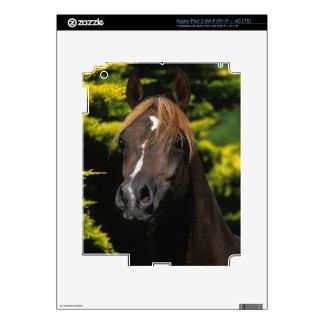 Arabian Stallion iPad 3 Skin