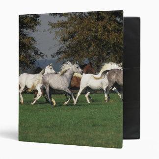 Arabs Running in Field Vinyl Binders