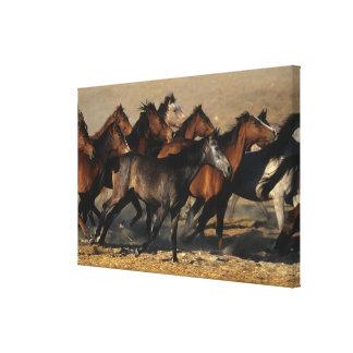Arabs Running in the Desert Canvas Print