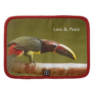 Aracari de encargo del verde del pájaro toucan planificadores