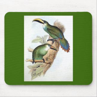 Aracari Toucan de Gould - de Langdorf Alfombrilla De Raton