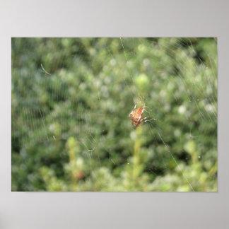 Arachnid Print