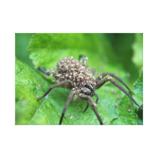Arachnid Spawn Gallery Wrapped Canvas