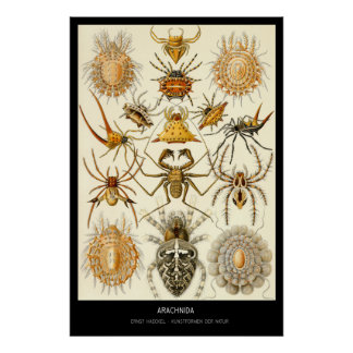 Arachnida – Plate 58 - Kunstformen der Natur Poster