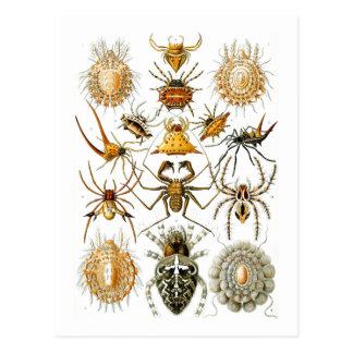 Arachnida (Spiders), Ernst Haeckel Postcard