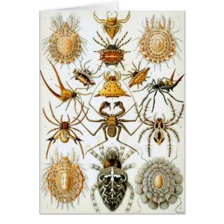 Arachnids by Ernst Haeckel, Vintage Spiders Card