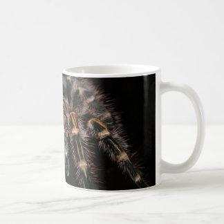 Arachnoid melenudo de la araña grande del taza de café