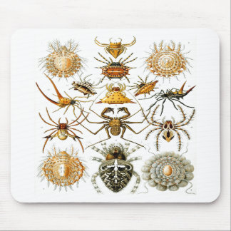 Arácnidos (arañas), Ernst Haeckel Tapete De Ratón