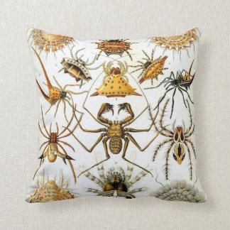 Arácnidos de Ernst Haeckel, arañas del vintage Cojín