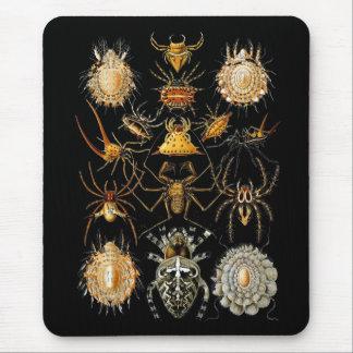 Arácnidos de Ernst Haeckel del artista del vintage Tapetes De Raton
