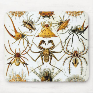 Arácnidos de Haeckel
