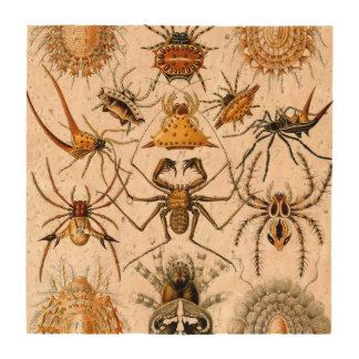 Arácnidos de Haeckel Posavasos
