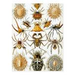 Arácnidos de Haeckel Postal