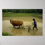 Arado del arroz impresiones