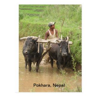 Arado en Pokhara Postal