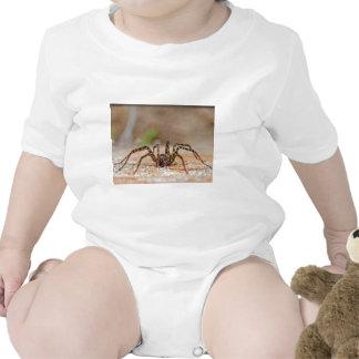 araña a traje de bebé