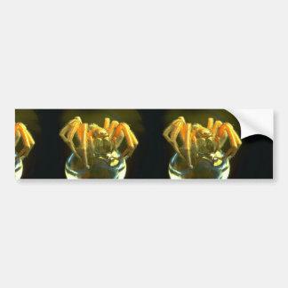 Araña amenazadora sobre el vidrio etiqueta de parachoque