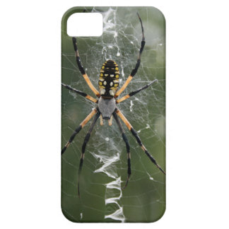 Araña/Argiope enormes del amarillo y del negro iPhone 5 Carcasas