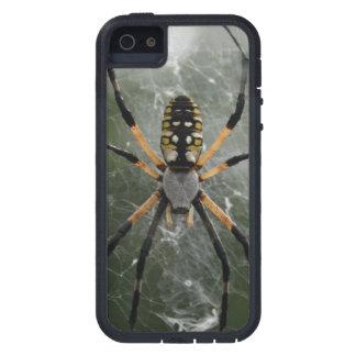 Araña/Argiope enormes del amarillo y del negro iPhone 5 Fundas