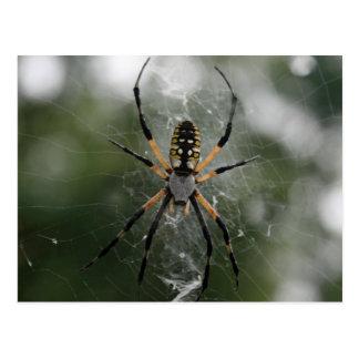 Araña/Argiope enormes del amarillo y del negro Postales