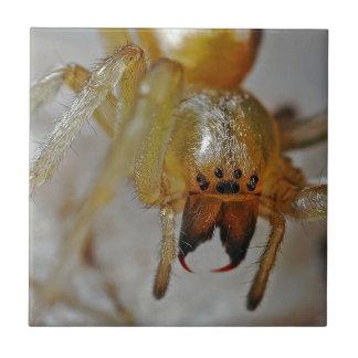 Araña asustadiza azulejo cuadrado pequeño