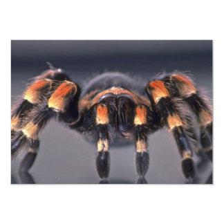"""Araña asustadiza del Tarantula Invitación 5"""" X 7"""""""