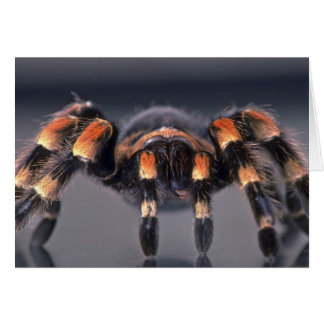 Araña asustadiza del Tarantula Tarjeton