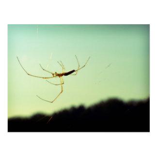 Araña bitsy de Itsy Tarjeta Postal