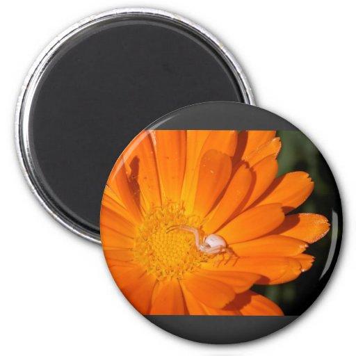 Araña blanca en una flor anaranjada imán redondo 5 cm