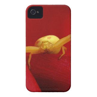 Araña candente iPhone 4 coberturas