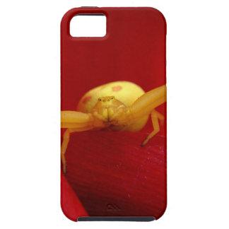 Araña candente iPhone 5 fundas
