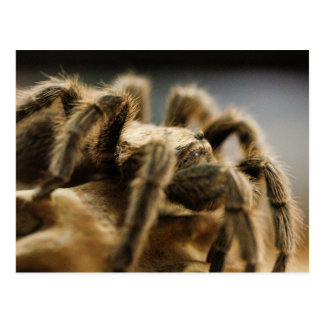 Araña contemplativa - imagen 8 del arte del postal