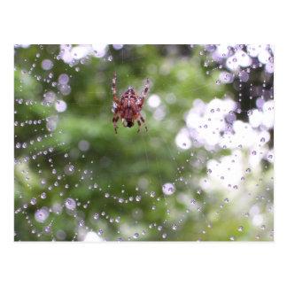 Araña cubierta de rocio tarjetas postales