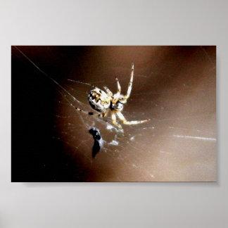 Araña de Itsy Bitsy Póster