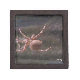 Araña de jardín de Brown Caja De Joyas De Calidad