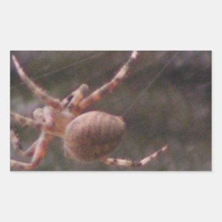 Araña de jardín de Brown Pegatina Rectangular