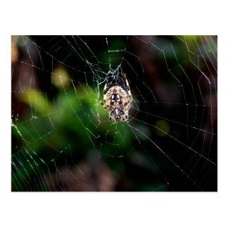 Araña de jardín del orbe que teje postal